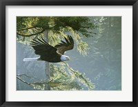 Framed Forest Flight / Eagle