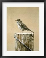 Framed Savannah Sparrow
