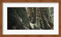 Framed Blacktail In Sitka
