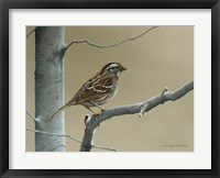 Framed White Throat Sparrow
