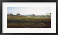 Framed Autumn Fields - Red Fox