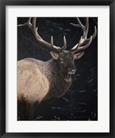 Framed Wapiti Portrait