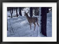Framed Whitetail & Wolves