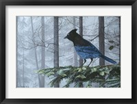 Framed Stellers Jay In Fog