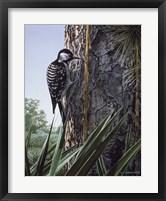 Framed Red Cockaded Woodpecker