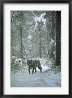 Framed Winter Encounter - Wolf