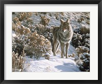 Framed Winter Sage- Coyote