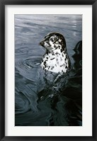 Framed Harbor Seal