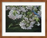 Framed Cherry Blossoms