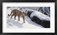 Framed Soft Snow- Cougar