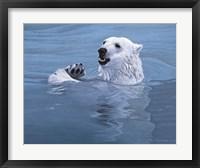 Framed Polar Bear