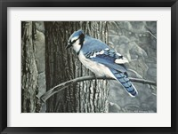 Framed Backyard Jay