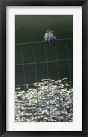 Framed House Sparrow & Daises