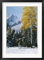 Framed Trembling Aspen