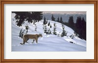 Framed Cougar In Snow