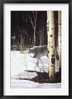 Framed Grey Wolf & Aspen