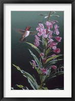Framed Fireweed