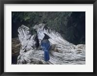 Framed Driftwood 2