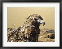 Framed Red Tailed Hawk 2