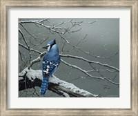 Framed Winter Jay