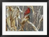 Framed Autumn Cornfield - Cardinal