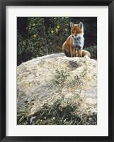 Framed Fox Pup At Den Entrance