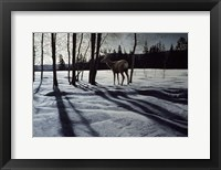Framed Afternoon Shadows- Mule Deer
