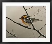 Framed Nashville Warbler