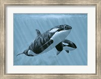 Framed Mother And Son- Orcas