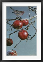 Framed Winter Apples - Purple Finch