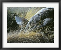 Framed California Quail