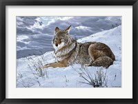 Framed Darkening Sky- Coyote