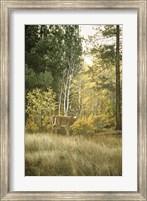 Framed Autumn Aspen - White Tailed Deer