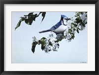 Framed Apple Blossoms And Bluejay
