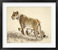 Framed Lioness And Cubs