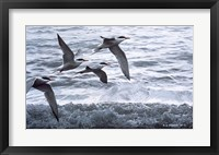 Framed Above The Waves - Common Terns