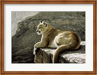 Framed Rimrock - Cougar