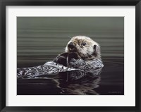 Framed Just Resting - Sea Otter