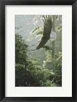 Framed Morning Flight - Eagle