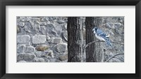 Framed Autumn Blue Jay
