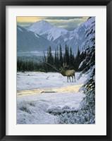 Framed Yellow Dawn - American Elk