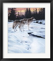 Framed Wolves At Sunset