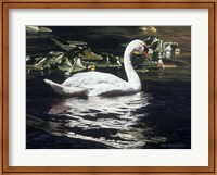 Framed Mute Swan And Lily Pads