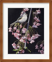 Framed Titmouse And Blossoms