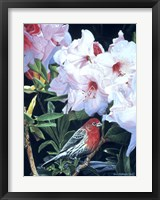 Framed Housefinch And Rhododendron