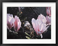 Framed Sparrow In Magnolia