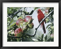 Framed Cardinal And Apples