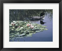 Framed Loon And Lilies