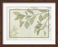 Framed Ghost Leaves II