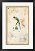 Framed Blue Magpie